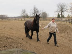 Cindy, the handler, bringing in the horse