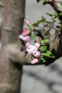 I hope all of these lovely blossoms will become delicious fruit.