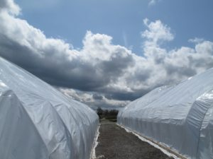 Back at the nursery, the wild clouds and bright blue skies were fascinating.