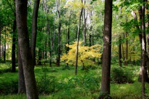 One year ago, these deep woods were a lush green while this tree was glowing yellow.