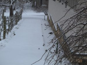 So many birds come to the feeders as a storm begins.