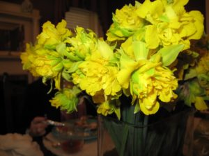 A fine old daffodil was cut from the garden.
