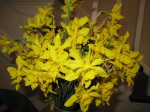 These unusual and delicate daffodils were so fragrant.