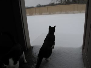 Betsy's cats want to experience snow for the first time!