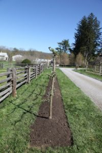 This photos shows how nicely aligned the trees were planted.