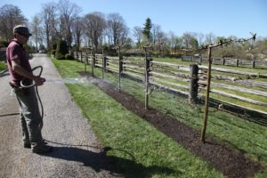 Once the site is cleaned up, Shaun gives these newly planted trees a good watering.
