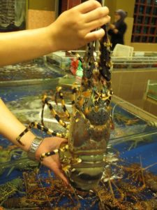 We contemplated this ornate rock lobster.