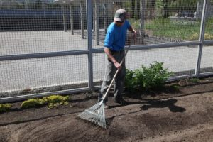 Shaun is smoothing this bed out getting it ready for planting.