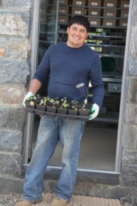 At the green house, Wilmer is bringing some broccoli seedlings outdoors for hardening.