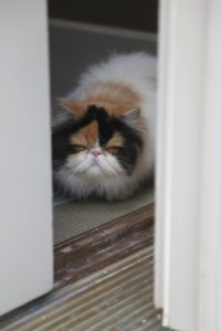 Princess Peony sits just inside the door, observing all of the activity going on around the farm.