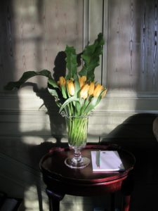 Yellow tulips and leather-leaf ferns looked great in the green room.