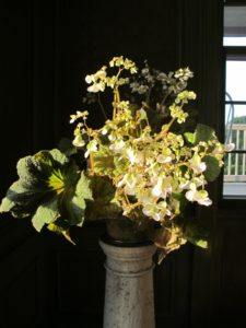 Shaun, my gardener, brought in lots of beautiful begonias to place on pedestals - many were in full  bloom.