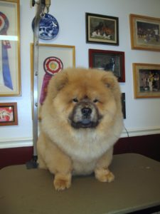I have a strong suspicion that G.K.'s photo as a champion show dog will be added to that wall soon.