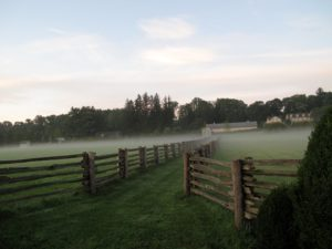 This is a walkway between paddocks - the mist is dissipating quickly as the sun rises.