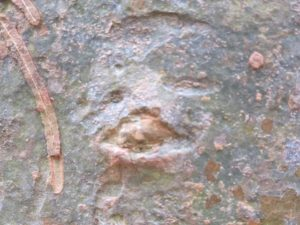 We all thought this bark design looked like an animal face - perhaps a bear?