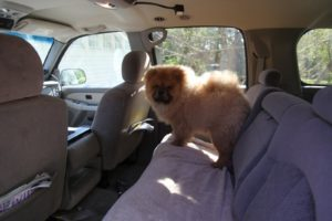 Here he is in the car, probably wondering why Francesca and Sharkey aren't coming along.