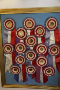 These are some of Michael's Westminster ribbons - he won 80 ribbons for Best in Shows.  He also won several for Best in Group, and Top Dog in Country.