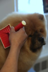 He didn't even seem to mind the brushing.