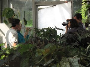 I asked the photographer to join us in the greenhouse and take some photos of this extraordinary begonia.