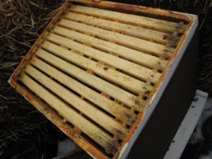 With the lid and cover removed, Guy discovers that there is a generous supply of honey and considerable bee activity.