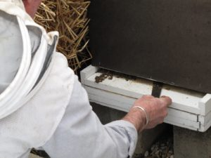 Next, Guy uses his hive tool to clean out any dead bees.