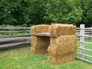 Stacked bales of hay provide shade and security.