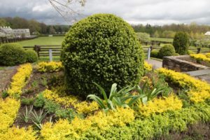 The bright yellow foliage is dwarf golden barberry.  As you can see, it offers an excellent color contrast in the border.
