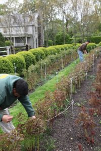 Three long rows of stakes run the length of each bed.