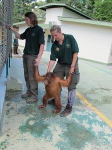 Here are two volunteers putting this little fellow in the group playpen.