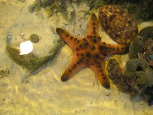 Such as this star fish and sea cucumber (upper right corner)