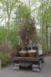 Some trees were placed on the dump truck to go elsewhere on the farm.