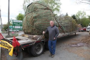 This is Mike Comisac standing next to quite a large copper beech, which was just delivered to his nursery from Pennsylvania.
