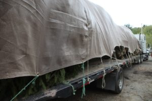 A flatbed of Norway Spruce being delivered to Shelter Island, out on the east end of Long Island