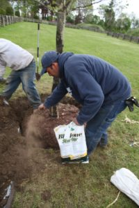 We like to use Bio-tone Starter http://www.espoma.com/p_consumer/biotone_overview.html when planting trees.  It is an all natural product proven to help transplants establish faster by increasing root mass to avoid transplant loss.