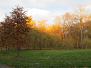 The setting sunlight cast a golden glow on the tree tops.