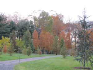 So many shades and colors - and such interesting shapes of trees