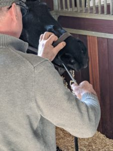Brian begins by filing the uneven and high edges of the front molars. The process of teeth floating and occlusion adjustment are not painful, but the sound of the rasp may need some getting used to, especially for a horse that is new to dental care.