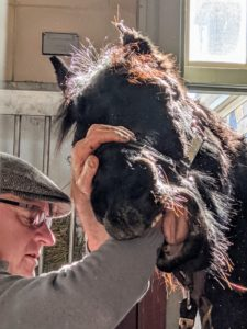 Much of Brian's work is done through feel. He feels for any abnormalities in the horse's mouth. Horses have 42 teeth in all. Of those, 24 are molars and premolars that are constantly growing and being worn away.