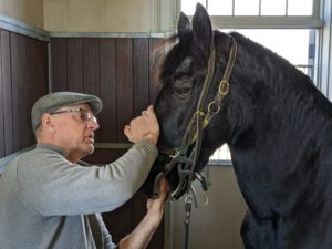 Brian checks Rutger's teeth and bite one more time before moving on to the next stall and horse. He also runs his hand up and down the cheek to check for scratches or sores or anything unusual.