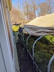 And here's Fernando removing the burlap from the opposite side - several feet away. We remove the burlap once the temperatures are consistently above freezing and before Easter. All of the coverings are custom wrapped and sewn to fit each individual shrub, hedge, or bush.