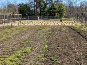 This is one of two large vegetable gardens located down by my chicken coops. Before this soil is tilled, any remnants of vegetables, other roots and vines, and any rocks are all removed. This makes it easier for the rototiller to do its job and prevents anything from getting caught in the tines.