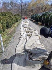 We use industrial burlap that's available in giant rolls of 40-inches or 60-inches wide. These covers are used for about three seasons before being replaced. I always encourage the crew to save whatever is possible.
