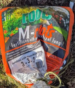 Always use a good fertilizer made especially for new trees and shrubs. We use M-Roots with mycorrhizal fungi, which helps transplant survival and increases water and nutrient absorption.