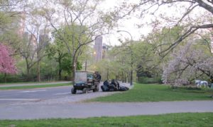 A Central Park Conservancy zone gardener loading trash at the top of the East Drive and East 66th Street. Conservancy crews care for 250 acres of lawns, 26,000 trees, 150 acres of lakes streams, 130 acres of woodlands; install hundreds of thousands of plantings annually, including bulbs, shrubs, flowers, trees; maintain 9,000 benches, 26 ballfields, 21 playgrounds; preserve 55 sculptures monuments 36 bridges; remove graffiti within 24 hours; collect over 5 million pounds of trash a year; provide horticultural support to City parks.