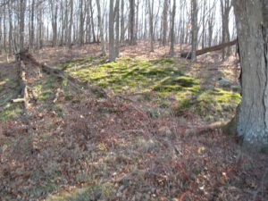 Some areas of the woods were covered in bright green, velvety mosses, which I love.