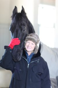 This is Martyn, one of my five Dutch Friesian geldings at Cantitoe Farm.