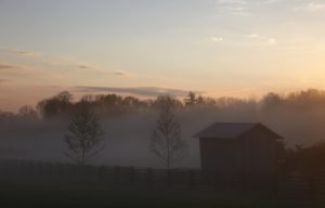 The morning mist was thick across the paddocks.  Notice two of the newly planted London Plane trees?