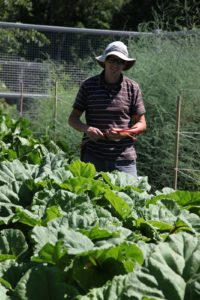 I asked Shaun to pick me very thin stalks of rhubarb for a special dessert for the new entertaining book photo shoot.
