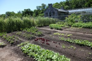Recently planted rows of radish - French Breakfast, lettuce - Merlot Batavian, radish - Early Scarlet Globe, and celeriac - Boule de Marbre