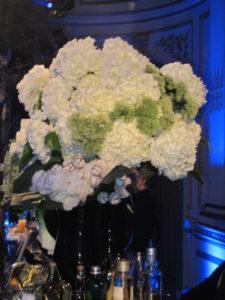 Gorgeous hydrangea